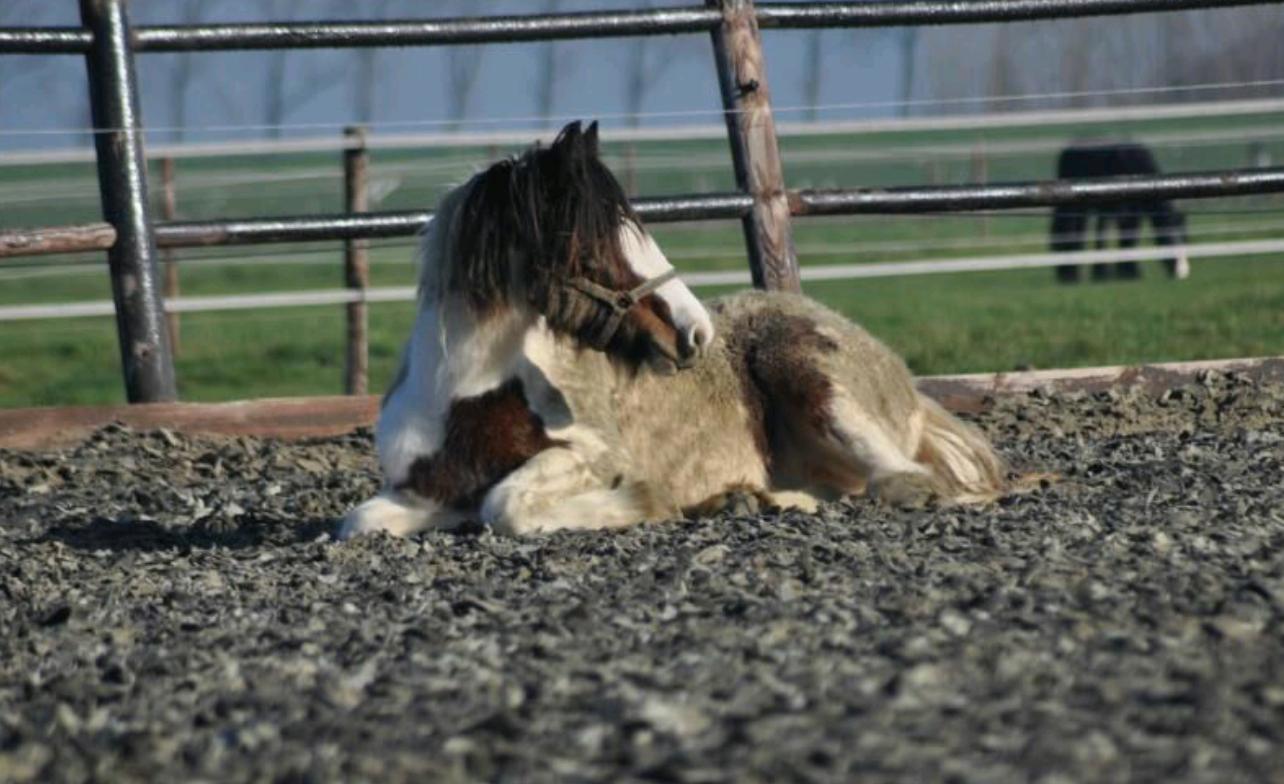 Paarden in mensenjaren
